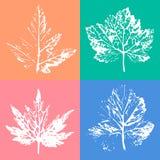 Bello modello senza cuciture dei bolli delle foglie dagli alberi e dalla Florida Fotografia Stock