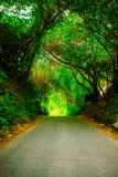 Bello modo del percorso o della strada in vicolo con gli alberi verdi ed in erba in all'aperto soleggiato di estate senza automob fotografia stock