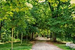 Bello modo del percorso o della strada in vicolo con verde fotografie stock
