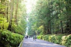 Bello modo della passeggiata della foresta vicino al patrimonio mondiale di Nikko, Giappone con illuminazione fantastica fotografia stock