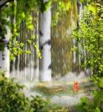 Bello montaggio mistico della foto del fondo con un boschetto della betulla, Immagine Stock Libera da Diritti