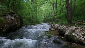 Bello movimento lento del fiume della montagna della natura archivi video