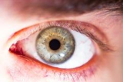 Bello occhio umano, macro, fine su blu, giallo, marrone, verde Fotografie Stock Libere da Diritti