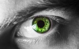 Bello occhio umano, macro, fine su blu, giallo, marrone, verde Immagine Stock