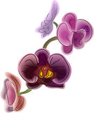 bello orchidea del fiore Fotografia Stock Libera da Diritti