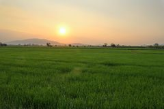 Bello paesaggio al giacimento del riso Immagine Stock