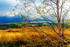 Bello paesaggio albero di betulla nella priorità alta Fotografia Stock