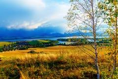 Bello paesaggio albero di betulla nella priorità alta Fotografie Stock