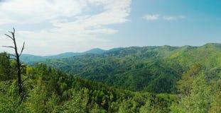 Bello paesaggio alpino con le montagne boscose verdi Fotografia Stock Libera da Diritti