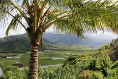 Bello paesaggio attraverso la palma Fotografia Stock Libera da Diritti