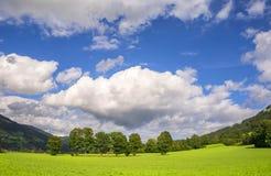 Bello paesaggio con gli alberi e le nuvole bianche Fotografia Stock
