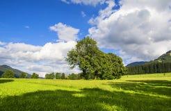 Bello paesaggio con gli alberi e le nuvole bianche Fotografia Stock Libera da Diritti