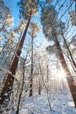 Bello paesaggio con gli alberi innevati - giorno di inverno di inverno soleggiato Fotografie Stock Libere da Diritti