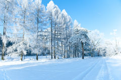 Bello paesaggio con gli alberi innevati - giorno di inverno di inverno soleggiato Fotografia Stock Libera da Diritti