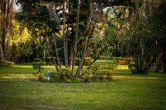 Bello paesaggio con i cocchi e un prato inglese verde fotografia stock