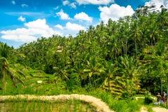 Bello paesaggio con i terrazzi verdi del riso vicino al villaggio di Tegallalang, Ubud, Bali, Indonesia Immagini Stock Libere da Diritti