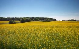 Bello paesaggio con il campo di canola giallo Immagini Stock Libere da Diritti