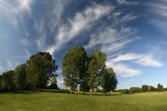 Bello paesaggio con il pascolo, gli alberi e il cirr Immagine Stock