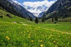Bello paesaggio con le alpi in Stilluptal, Mayrhofen, Austria Fotografia Stock