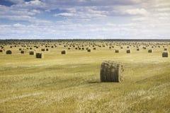 Bello paesaggio con le balle della paglia nella conclusione di estate Campo con i lotti delle balle di fieno Fotografia Stock