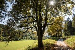 Bello paesaggio con le castagne in camice sveve Immagine Stock