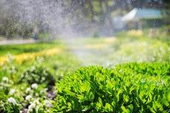 Bello paesaggio con lo spruzzatore automatico che spruzza innaffiando il prato inglese nel giardino domestico con un arcobaleno n immagine stock libera da diritti