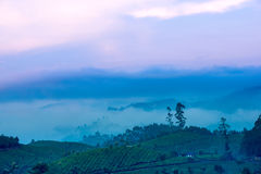 Bello paesaggio con un albero e nebbia in una foschia prima dell'alba dentro dentro Fotografia Stock