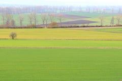Bello paesaggio d'agricoltura - campi ed alberi verdi Immagini Stock