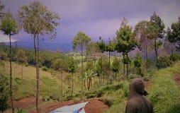 Bello paesaggio dal giardino di tè in Java ad ovest, Indonesia Fotografia Stock Libera da Diritti