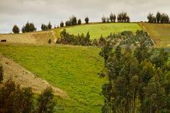 Bello paesaggio degli altopiani ecuadoriani Fotografia Stock Libera da Diritti