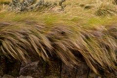 Bello paesaggio degli altopiani ecuadoriani Immagini Stock Libere da Diritti