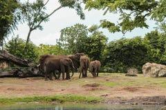 Bello paesaggio degli elefanti africani nel parco immagine stock
