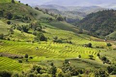 Bello paesaggio del campo dei terrazzi del riso Produzione del riso in Tailandia Fotografia Stock