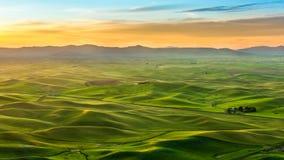 Bello paesaggio del campo del raccolto in Palouse di mattina Fotografie Stock Libere da Diritti
