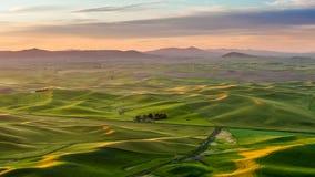 Bello paesaggio del campo del raccolto in Palouse di mattina Fotografia Stock