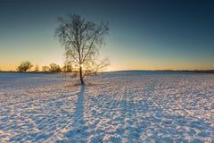 Bello paesaggio del campo di inverno Fotografia Stock