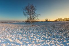Bello paesaggio del campo di inverno Immagine Stock Libera da Diritti