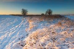 Bello paesaggio del campo di inverno Immagine Stock