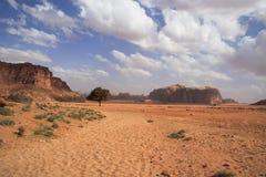 Bello paesaggio del deserto con l'albero solitario Fotografie Stock