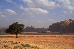 Bello paesaggio del deserto con l'albero solitario Fotografia Stock