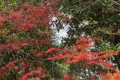 Bello paesaggio del fogliame di caduta, fogliame di autunno nel parco Immagini Stock