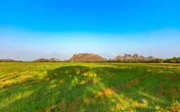 Bello paesaggio del giacimento del riso di agricoltura con cielo blu luminoso Immagine Stock Libera da Diritti