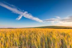 Bello paesaggio del tramonto sopra il campo di grano ad estate Fotografia Stock