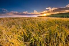 Bello paesaggio del tramonto sopra il campo di grano ad estate Fotografie Stock