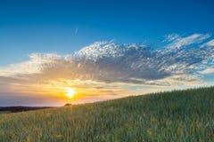 Bello paesaggio del tramonto sopra il campo di grano ad estate Fotografia Stock Libera da Diritti