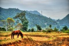 Bello paesaggio del Vietnam del Nord Immagini Stock Libere da Diritti