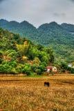 Bello paesaggio del Vietnam del Nord Fotografia Stock Libera da Diritti