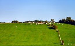 Bello paesaggio del villaggio con il pascolo verde Fotografia Stock Libera da Diritti