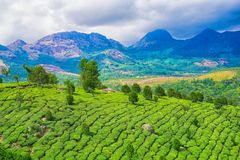Bello paesaggio dell'India con le colline e le montagne, tè verde p Fotografia Stock