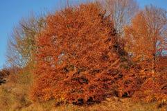 Bello paesaggio della collina di autunno Immagine Stock